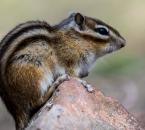 顾乡公园的花松鼠